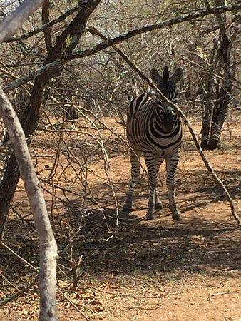 Marloth Park, South Africa: photo6.jpg
