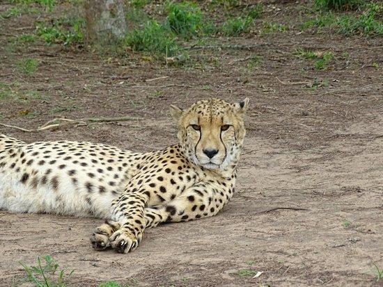Hluhluwe Game Reserve, Sydafrika: DSC04731_large.jpg