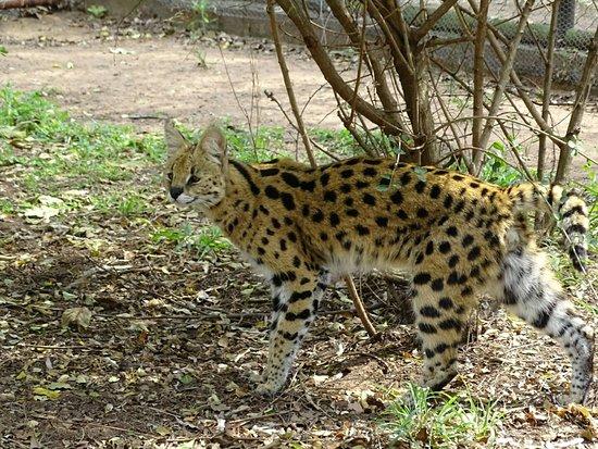 Hluhluwe Game Reserve, Sydafrika: DSC04720_large.jpg