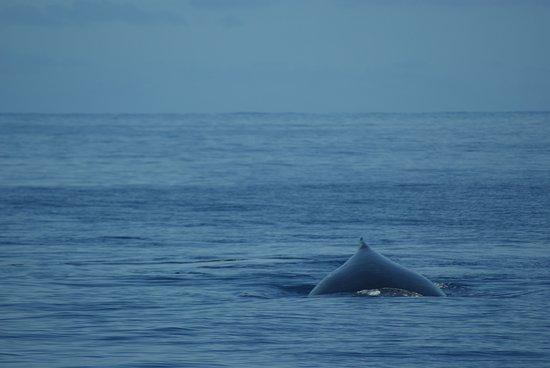Baleine à 100 Métres.