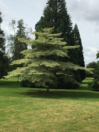 Haywards Heath, UK: photo0.jpg