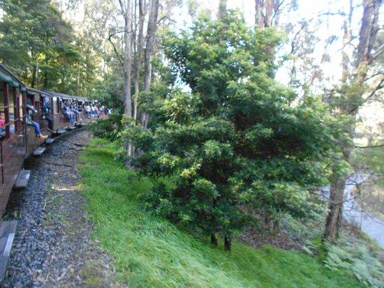 Belgrave, Australia: 森林地帯を走ります