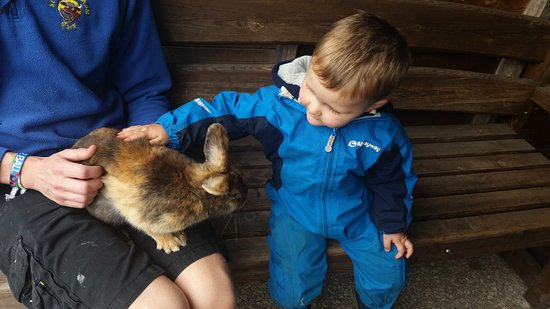 Northwich, UK: A tame bunny.