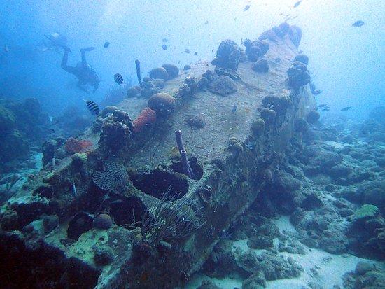 Buddy Dive: The La Machaca wreck on Buddy's Reef