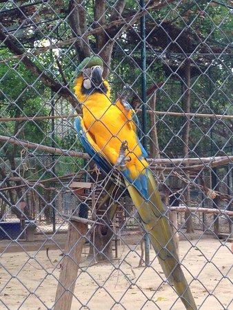 Та-Янг, Таиланд: photo1.jpg