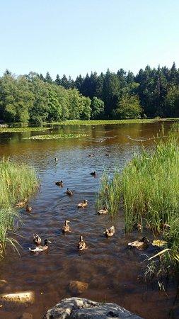 Clane, أيرلندا: 20160719_164446_large.jpg