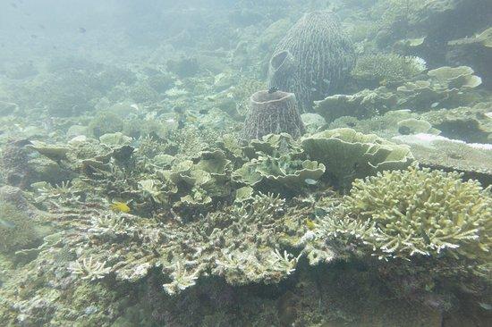 Pulau Redang, Malezya: photo6.jpg