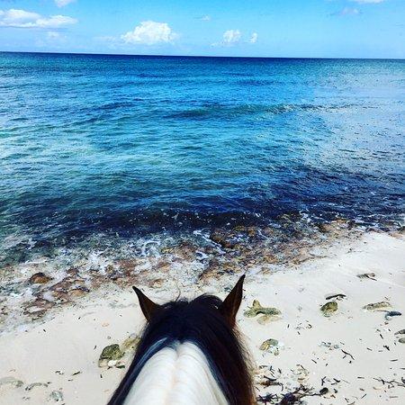 Bayahibe, République dominicaine : Special point of view