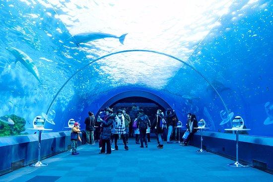 橫濱・八景島海洋樂園