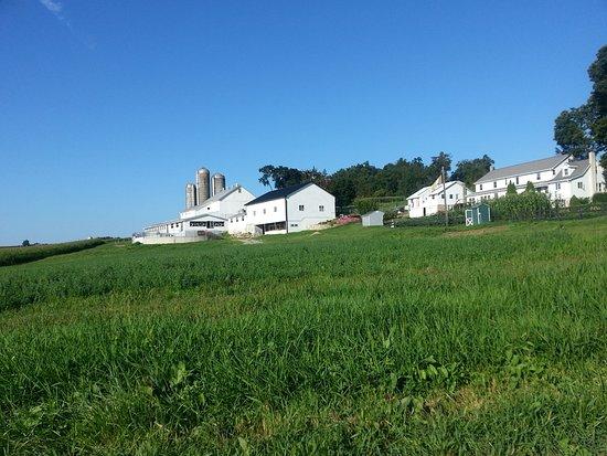 Amish farm - Strasburg Scooter Tour