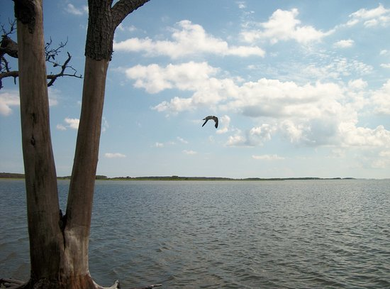 Bilde fra Assateague Island National Seashore