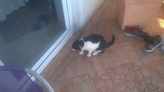 Silo, Hırvatistan: Il gatto curioso