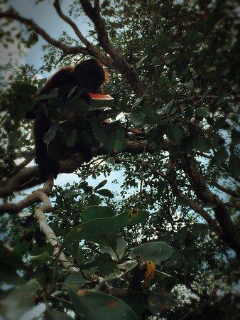Orange Walk, Belize: photo3.jpg