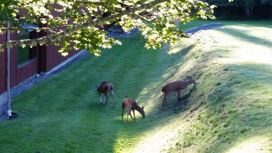 Quadra Island, Canada: Morning visitors