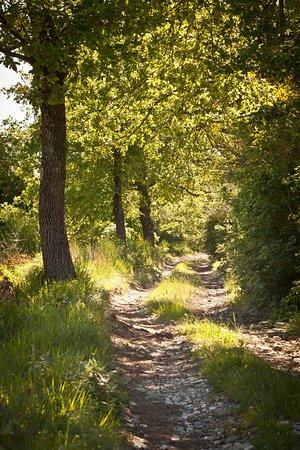 Relais Parco del Subasio : Un sentiero circostante per le passeggiate nel parco