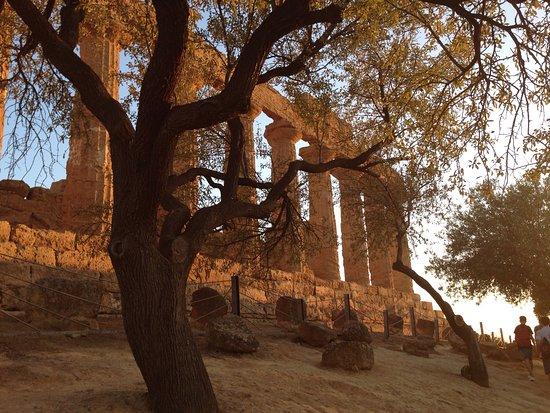 Guide Turistiche Agrigento : photo1.jpg
