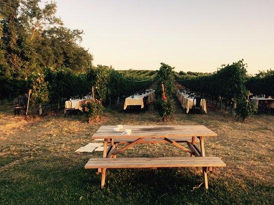 Pianoro, Italie : Wine Dinner in the Vineyard