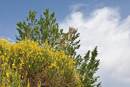 Relais Parco del Subasio : La vegetazione naturale -Ginestra