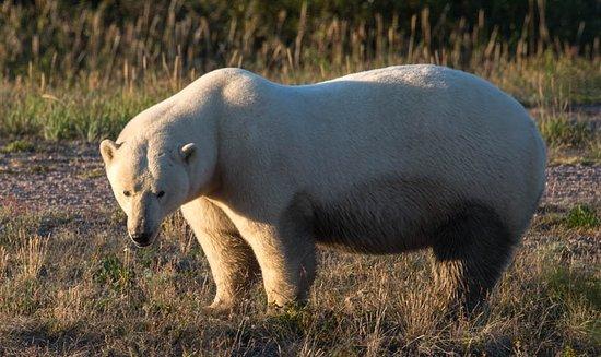 Nanuk Polar Bear Lodge Photo