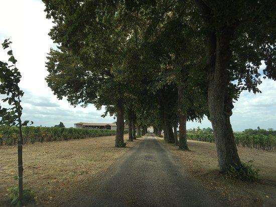 Neac, Francia: Wonderful Belles graves