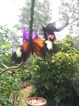 Mariposario Tambopata : photo0.jpg