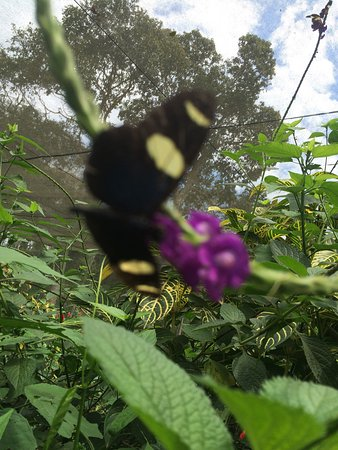 Mariposario Tambopata : photo1.jpg