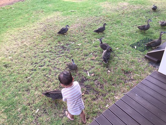 Cowaramup, Australia: Feeding the ducks from our cabin