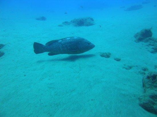 Safari Diving Lanzarote : nel blu