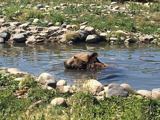 Боузман, Монтана: photo2.jpg