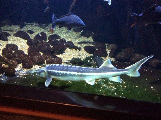 Bergen Aquarium: fotograf?a de Bergen Aquarium, Bergen - TripAdvisor