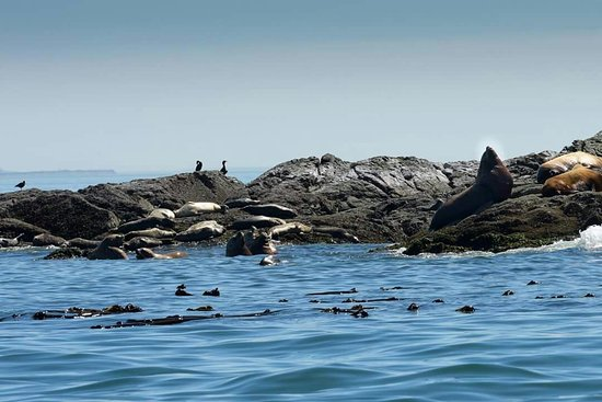 San Juan Islands, Etat de Washington : FB_IMG_1471800237060_large.jpg