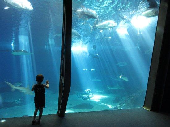 Wailuku, Hawái: Aquarium
