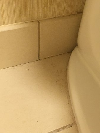 Coralville, IA: Dirty floors and hair in room 101.