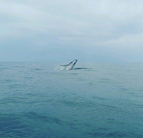 Whale Watching: Observação de Baleias