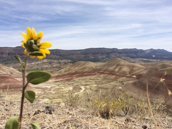 Dayville, OR: Wild sunflowers dot the landscape.