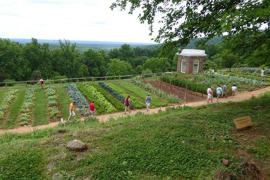 Charlottesville Görüntüsü