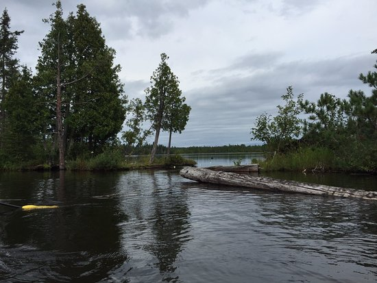 Ely, MN: Beautiful shore from kayaks