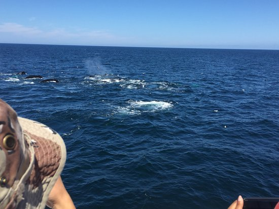 Barnstable, MA: Great crew and the whales never disappoint. Each season there seem to be more whales off Cape Co