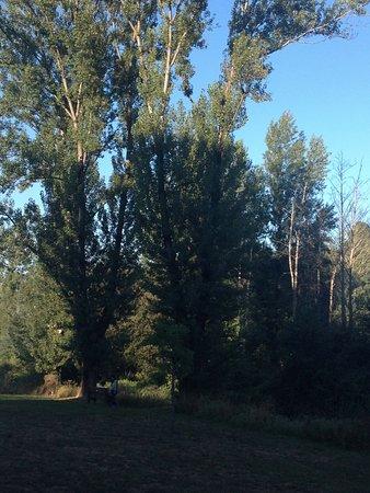 Vila Nova de Famalicao, Portugal: as árvores junto ao rio