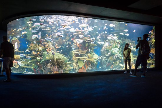 Large aquarium tanks 1000 aquarium ideas for Large fish tank