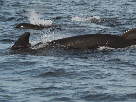 Oshan Whale Watch: Playful Pod