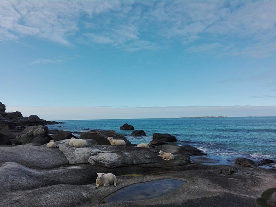 Nordland, Noruega: IMG_20160816_133648_large.jpg