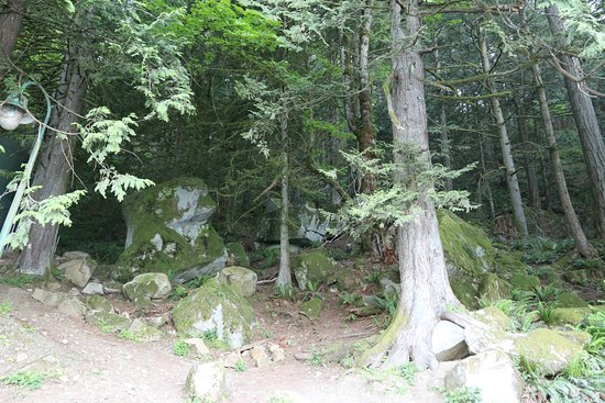 Harrison Hot Springs, Canada: Forest