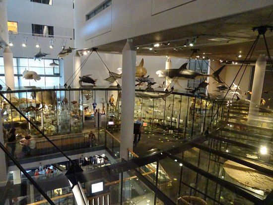 Naturalis biodiversity centre Picture of National Museum of