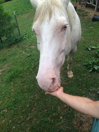 Clyde, นอร์ทแคโรไลนา: Horses at Milima that love attention, carrots and apples