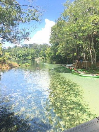 Wekiwa Springs State Park: rio