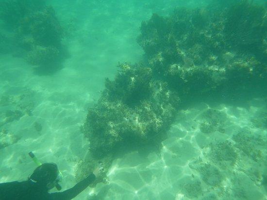 Oyster Pond, เซนต์มาร์ติน / ซินท์มาร์เทิน: Reef snorkling