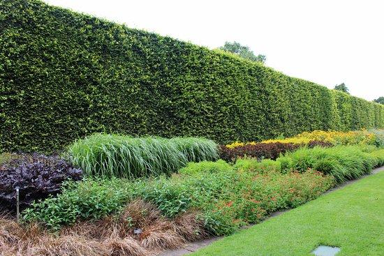 Muro verde en el Jardín Botánico - Picture of Royal Botanic Garden ...