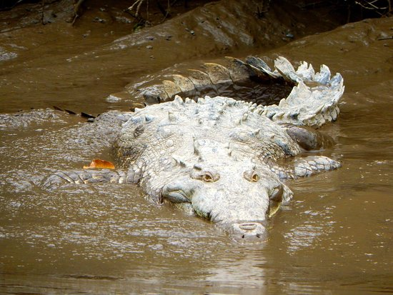 Province of Guanacaste, Κόστα Ρίκα: We were able to great shots of wildlife.  Drive in yourself and do the tour for $50.
