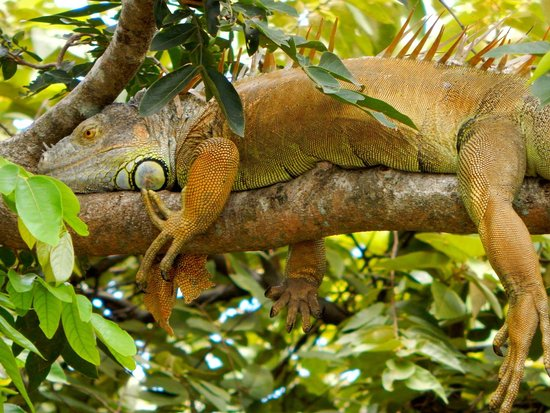 Province of Guanacaste, Kosta Rika: We were able to great shots of wildlife.  Drive in yourself and do the tour for $50.